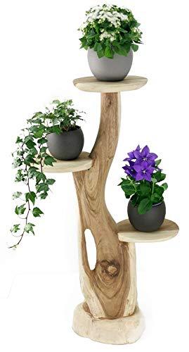 My-goodbuy24 Blumenständer Blumentreppe Blumenpodest Blumenhocker Pflanzen Blumen Treppe Holz Massivholz Suar mit 3 Ablagen