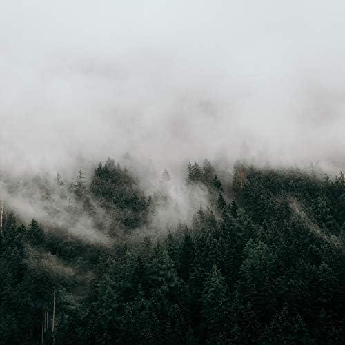 Brain Study Music Guys, Calming Rainforest Sounds & Deep Sleep