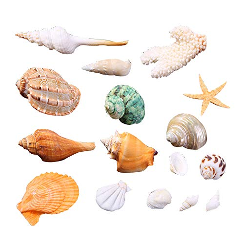 Wankd Surtido de conchas de mar,Hermosas conchas marinas naturales con tarro de playa natural mixta conchas marinas decorativas para hacer en casa regalos de bricolaje decoración artesanal