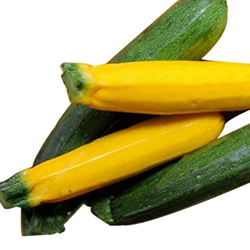 kemanner Garten 20 Stü Zucchini Samen Bunte Hausgarten Gemüsesaatgut Bio Gemüse für Balkon und Garten Saatgut