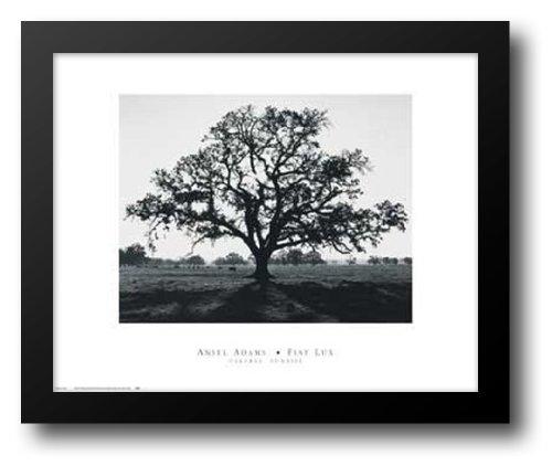 Oak Tree, Sunrise 24x20 Framed Art Print by Adams, Ansel