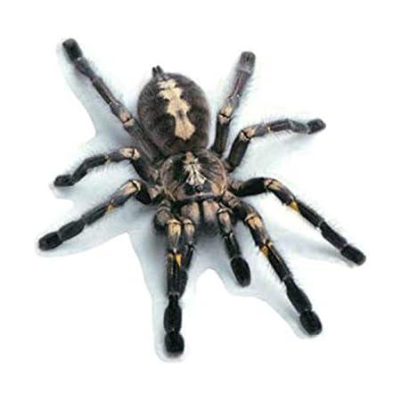 Schwarze Tarantel Vogelspinne Sticker Spinne Spider Elektronik