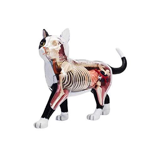 BBYT 4D Vision Katze Anatomie Modell, Puzzle Zusammenbau Spielzeug Tier Biologie Organ Medizinisch Unterrichtsmodell