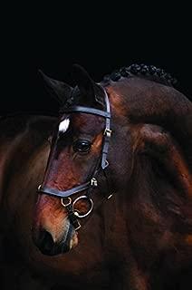 horseware micklem multibridle