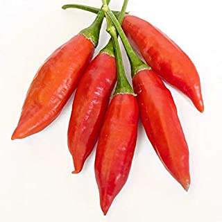 Organic Chili Long Fat | Hot & Spicy | Natural & Slightly Crisp - 500 gm