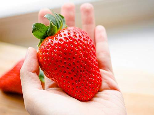 20 Maxim Erdbeerpflanzen (XXL Riesenerdbeeren) - Frigo Pflanzen - Pflanzzeit: März/April - Ernte: Juni - Erdbeersetzlinge/Erdbeerstecklinge - Erdbeerprofi.de