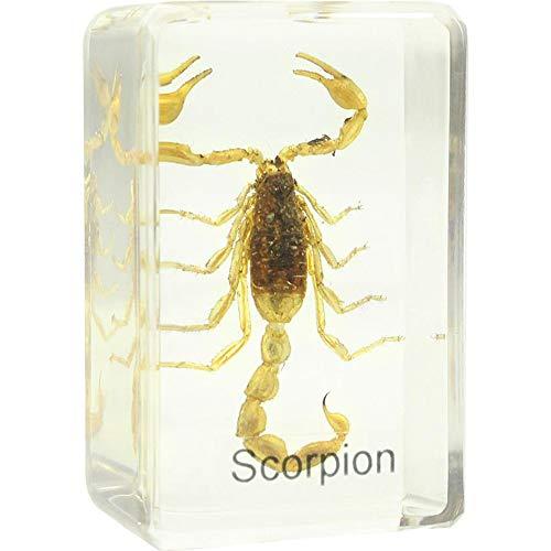 Omegon Dauerpräparat Skorpion