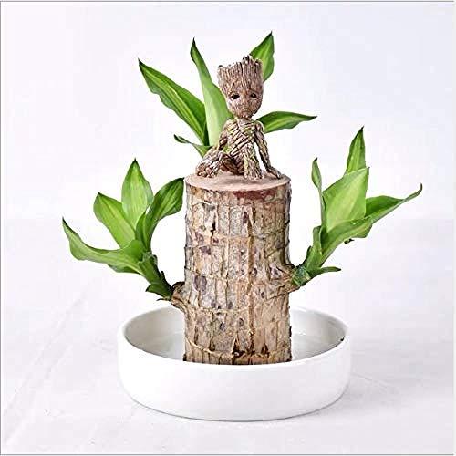 Blumentopf Figur - Übertopf Groß Aquarium Deko Figur Holz Aschenbecher Stiftehalter - Innen