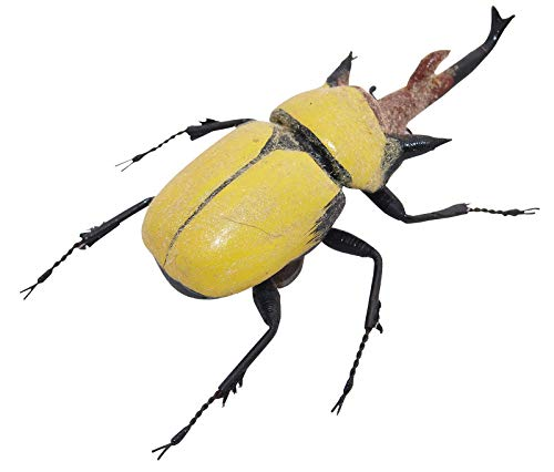 Kit per entomologia