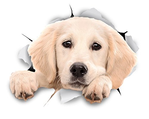 Winston & Bear 3D Dog Stickers - 2 Pack - Peeking Labrador Stickers For Wall, Fridge, Toilet And More White Labrador Stickers