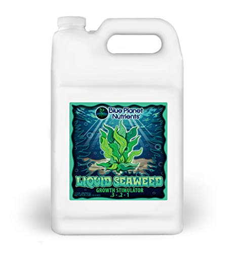 Liquid Seaweed for Plants (128 oz) Gallon | Concentrated Liquid Kelp Supplement from Blue Planet Nutrients | Boost Growth & Plant Health | for All Plants & Gardens