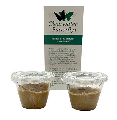 Clearwater Butterfly Company 10 Live Caterpillars to Grow Painted Lady...