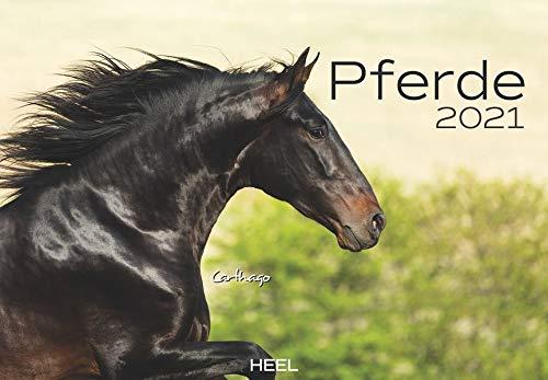 Pferde 2021: Der sympathische Pferde-Kalender mit den charmanten Namen