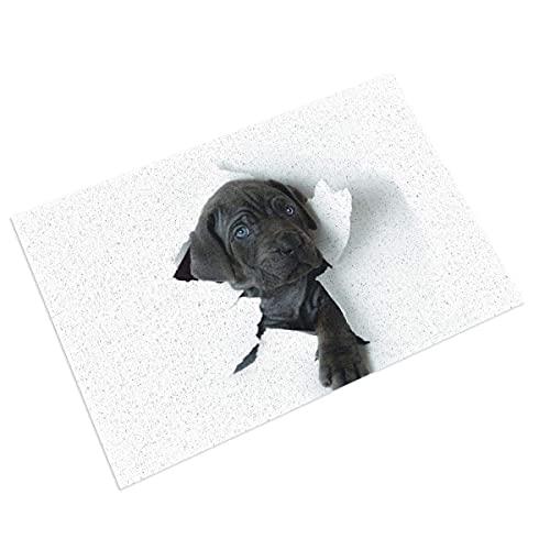 DLJIYZX Felpudo Encantador Labrador Puppy Kids Entrada PVC Felpudo con Respaldo Antideslizante, para baño 40X60CM