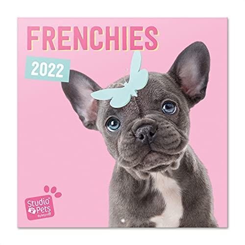 Grupo Erik Studio Pets Bulldogge Kalender 2022 Wandkalender 2022 Groß für 16 Monate