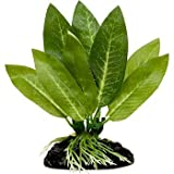 Blue Spotted Betta Plant, Amazon Sword Great for Betta Fish and Use Betta Leaf Pad & Betta Log