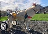 Adjustable Dog Wheelchair Size XL, Hip Height: 22-26.8', Hip Width: 10.2'-15.8', Weight: 44-110lbs, hind Legs Rehabilitation