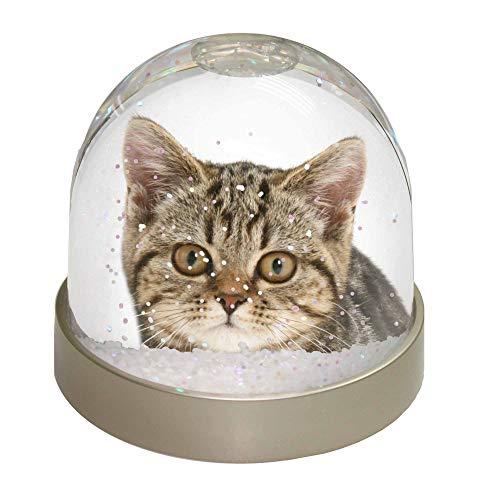 Advanta Face von Braun gestromt Katze Schneekugel Snow Dome Geschenk, Mehrfarbig, 9,2x 9,2x 8cm