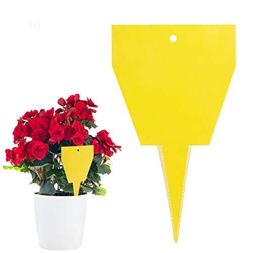 ZOORE Gelbtafeln gegen Trauermücken Bio Gelbstecker insektizidfrei, Leimfallen zum Schutz von Zierpflanzen, Blumentopf Klebrige Insektenfallen 10