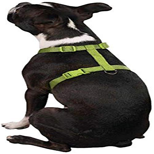 Zack & Zoey 5/8-Inch Nylon Dog Harness with Nickel-Plated D-Ring and Plastic Buckles, Parrot Green