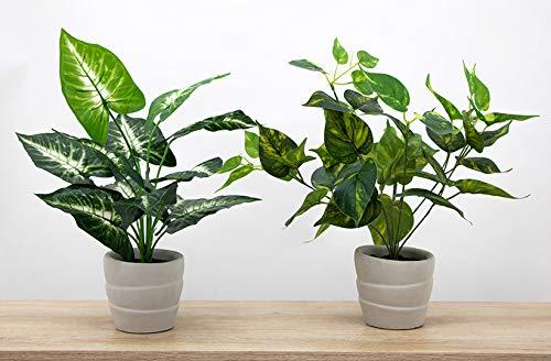 Línea Déco | Lote de 2 plantas verdes artificiales en maceta de cemento, 42 cm, planta verde artificial, planta tropical, decoración de interior y oficina