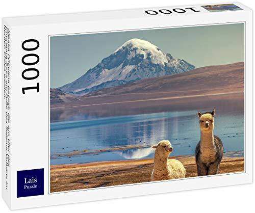 Lais Puzzle Alpaca (Vicugna Pacos) pastando en Las orillas del Lago Chungara en la Base del volcán Sajama en el Norte de Chile. 1000 Piezas