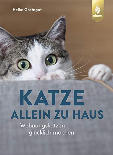Katze allein zu Haus: Wohnungskatzen glücklich machen