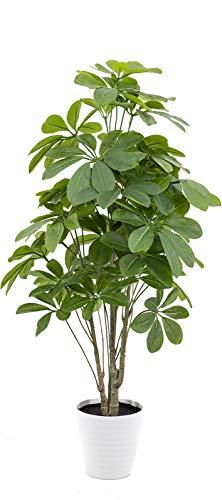artfleur - künstliche Schefflera (Strahlenaralie) Lackblatt 80cm Kunstpflanze Grünpflanze Topfpflanze