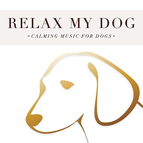 Dog Music & Relaxation & Ambient Ambient Music Therapy (Deep Sleep, Meditation, Spa, Healing, Relaxation)