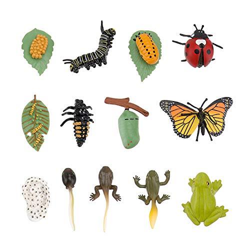 TOYANDONA Juego de 3 figuras de insectos y ciclos realistas, mariposas, rana, mariquita, vida útil del ciclo, juguete educativo para niños