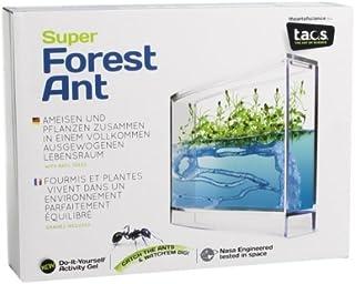 AntHouse Hormiguero de Gel Azul con Plantas (Hormigas Incluidas Gratis)