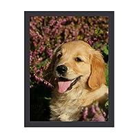 INOV リトリーバー 金子犬 アートパネル 壁掛け インテリア アートフレーム おしゃれ 絵画 額入り ブラックフレーム付き 部屋 壁面 30x40cm