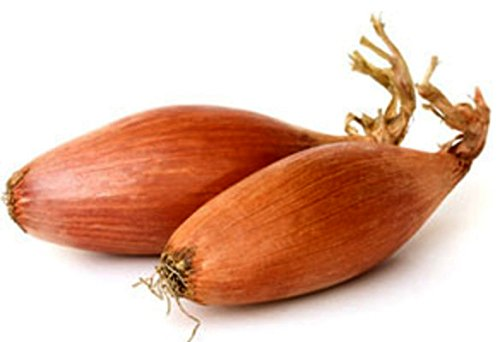 Schalotte Zebrune - Zwiebel - 40 Samen