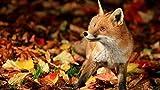 Aixmuy Puzzles Rompecabezas para Adultos 1000 Piezas - Rompecabezas De Madera Clásicos Juego De Arte Educativo Regalo DIY Little Fox