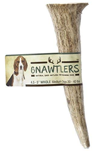 Gnawtlers - Premium Elk Antlers For Dogs, Naturally Shed Elk Antlers, USA Natural