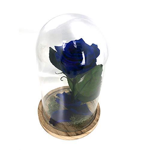 Cúpula Bella y Bestia Rosa Eterna Preservada Azul Oscuro