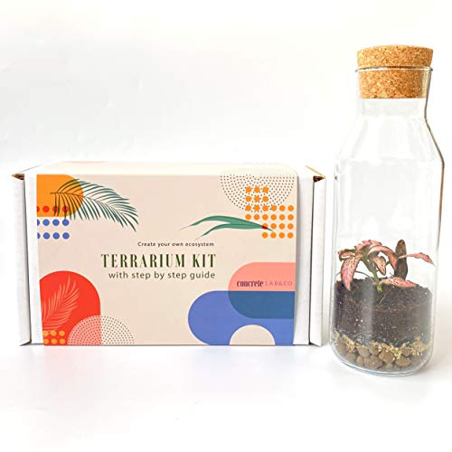 Kit terrarium avec récipient en verre et couvercle en liège - Mini jardin - Idée cadeau - Kit bricolage Kit Only