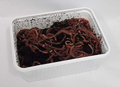 Green Gardener Wormery/Composting Worms (250)