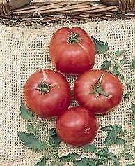 Gregpol - Tomato German ct 250 Johnson Max 51% OFF Max 88% OFF