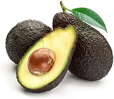 9EzTropical - HASS Avocado - Grafted Tree - 1 to 2 Feet Tall - Ship in 1 Gal Pot