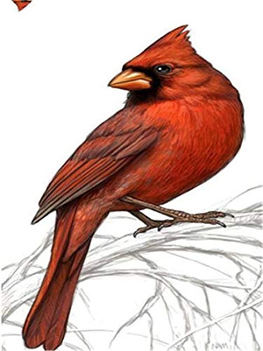 DIY Oil Painting Paint by Number Kit for Kids Adults Beginner 16x20 inch - Red Bird on The Branch, Drawing with Brushes Christmas Decor Decorations Gifts (Without Frame)