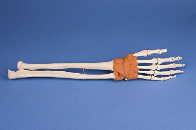 Handgelenk-Modell B0179QX6JE | Nutzen Nutzen Nutzen Sie Materialien voll aus  84626c