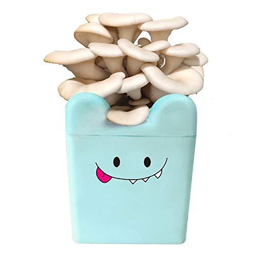Ledph Cultivo De Hongos Kit Interior, Micro Setas Semillas Bonsai para Plantar Verduras, Cultivar Setas En Casa, Spore OrgáNico Spors Mycelium Plug Spawn Kit,White Flat Mushroom
