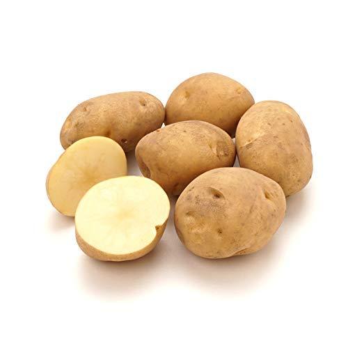 北海道産 ご家庭用 じゃがいも 品種おまかせ 10kg (共撰/サイズお任せ) 馬鈴薯 ジャガイモ