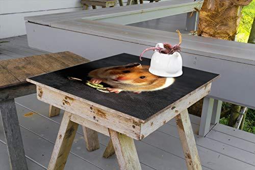 Wallario Aufkleber Selbstklebende Garten-Tisch-Decke - Putziger Hamster mit Nüssen zwischen den Pfoten in 80 x 80 cm