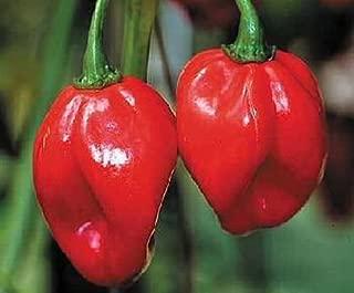 December01 Red Savina Hot Pepper 10+ Seeds The Last World Record Holder for Hot
