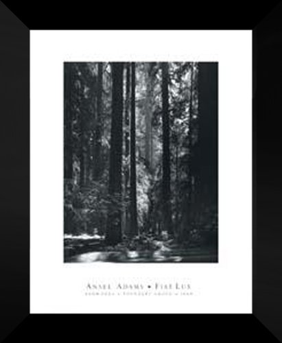 Ansel Adams FRAMED 20x24  Redwoods, Founder s Grove