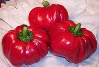 pimento pepper seeds