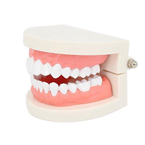 ROSENICE Zahnmodell Zahnmodell Standard Dental Lehrstudie Typodont Demonstration Tool