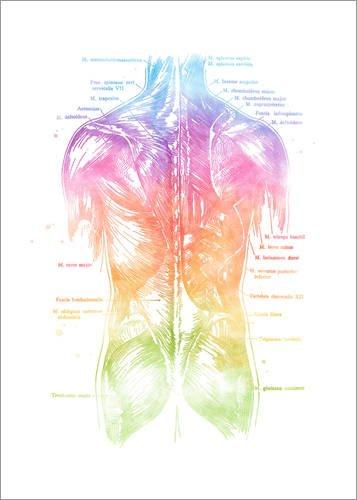 Poster 50 x 70 cm: Regenbogen Rücken von Mod Pop Deco - hochwertiger Kunstdruck, neues Kunstposter